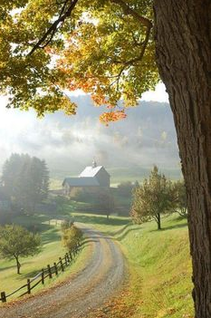 Misty Spring mornings on the Farm
